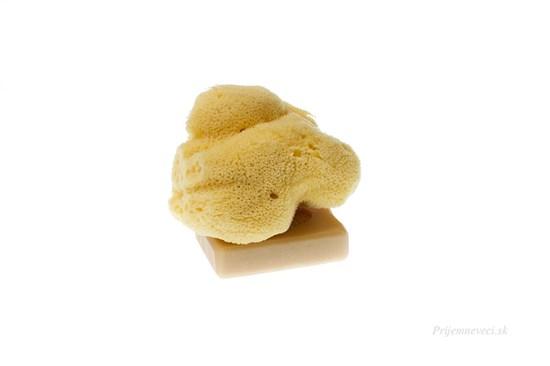 Morská huba hodvábna - veľká bielená