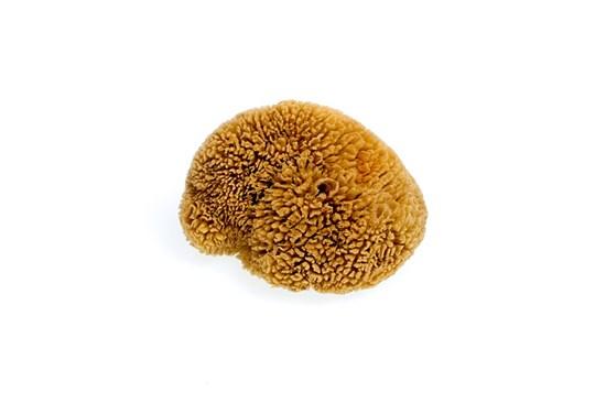 Morská huba tráva stredná -  nebielená