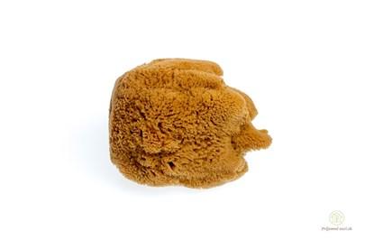 Obrázok pre výrobcu Morská huba Hardhead veľká - nebielená