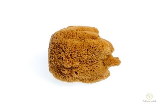 Morská huba Hardhead veľká - nebielená