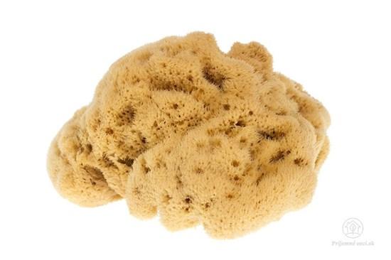Morská huba hodvábna - veľká nebielená
